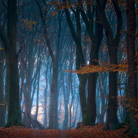 Goedemorgen Bos van Jeroen Lagerwerf