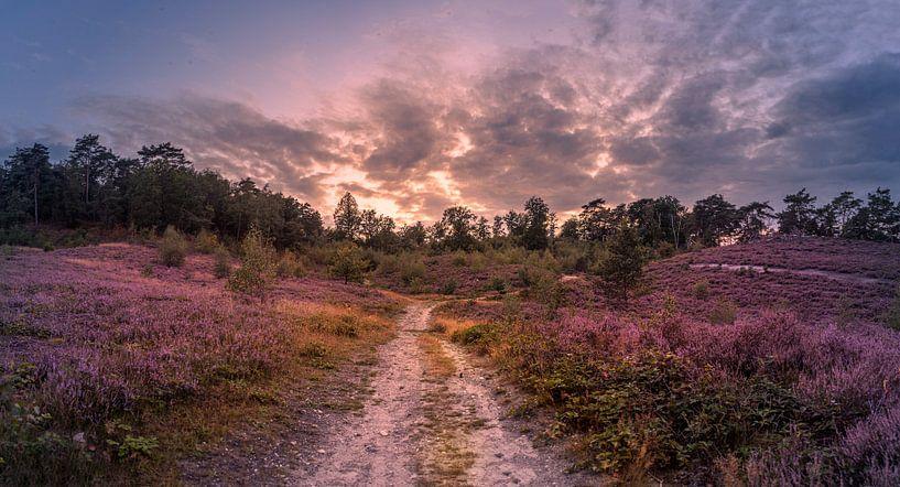 purple van Bas Handels