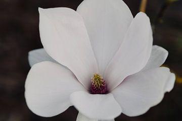 Magnolia portrait van