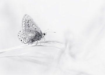 Schmetterling in schwarz und weiß von Remco loeffen