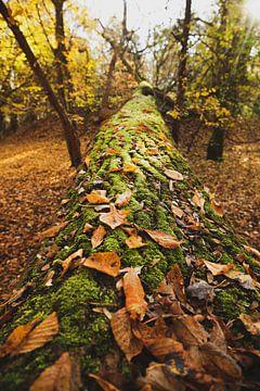 Nationaal Park Zuid-Kennemerland 002 van Gerhard Niezen Photography