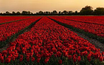 Rode pracht van Jan Tuns