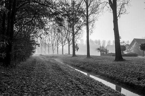 Rundwald mit Nebel von Jaap Mulder
