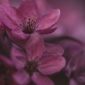 Fleurir sur Marieke Tegenbosch