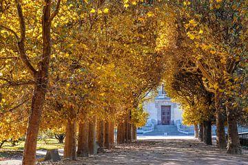 Allee im Jardin des Plantes im Herbst, Paris von Christian Müringer