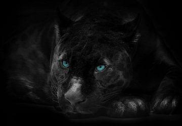 De zwarte panter