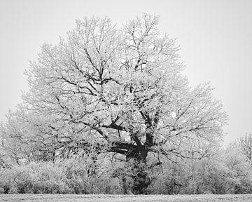 Winterliche Textur von Keith Wilson Photography