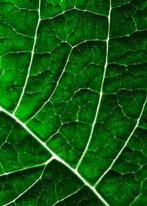 LEAF STRUCTURE GREENERY no4