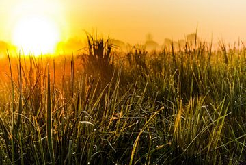 Weide in het ochtendlicht van Norbert Sülzner