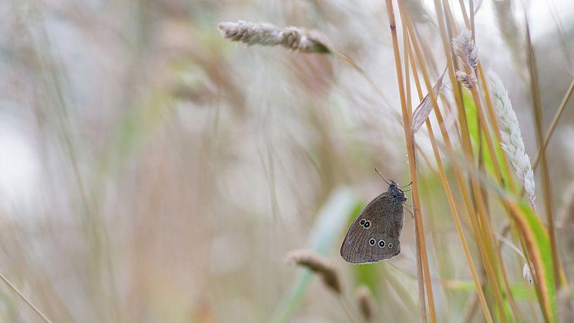 Koevinkje tussen het gras sur Jan Jongejan