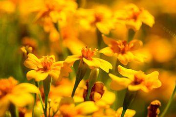 Blumenwelt 1 van Dirk Herdramm
