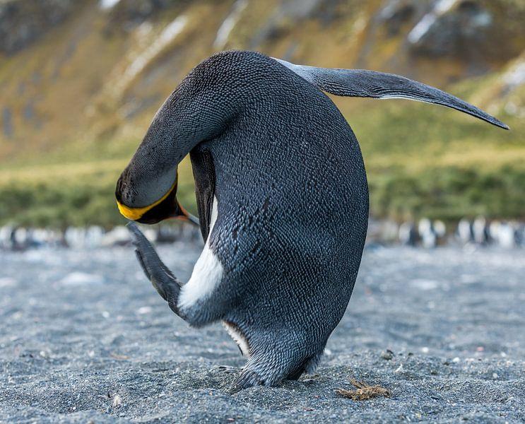 pinguïn yoga sur Robert Riewald
