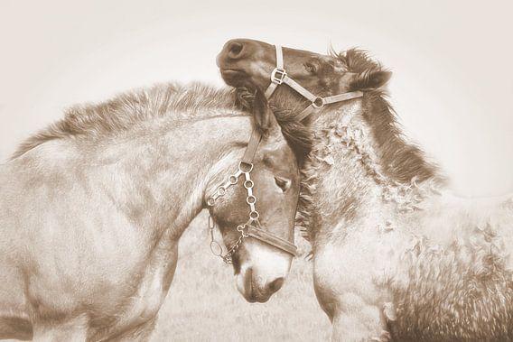 horse love...  van Els Fonteine