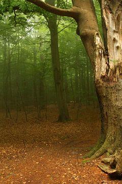 Nebelwald von Heike Hultsch