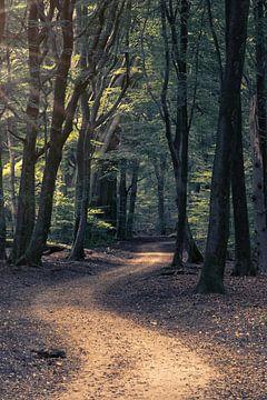 Sich windender Waldweg von Dirk-Jan Steehouwer