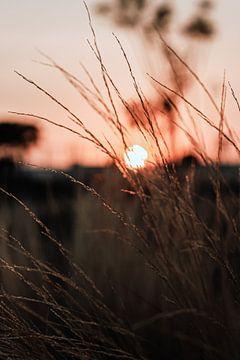 Rosa Sonne bei Sonnenaufgang hinter den Mooren von AIM52 Shop