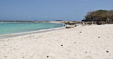 Baby Strand, Aruba von Talitha Blok