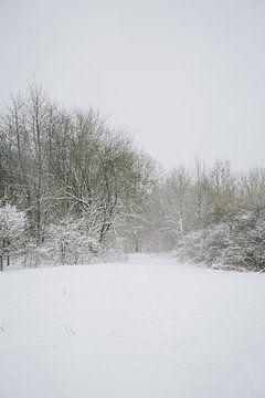 Winter wonderland tijdens een sneeuwstorm in een bos in Almere, Nederland | Sneeuw landschappen in e van Evelien Lodewijks