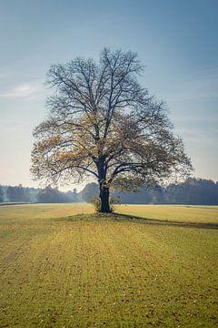 Baum im Herbst von Connie de Graaf
