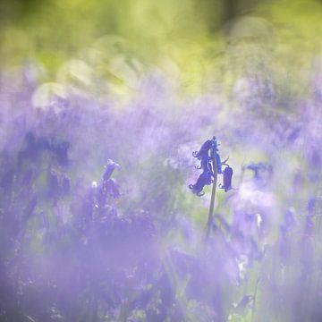 Bluebells von Christl Deckx