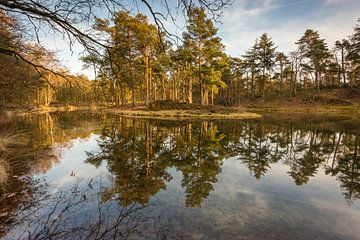 Birkhoven Wald Spiegelung Teich - Amersfoort, Niederlande von Thijs van den Broek