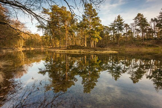 Birkhoven Bosvijver Reflectie van Thijs van den Broek