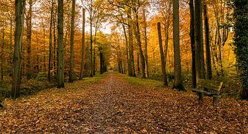Einladung zu einem Herbstspaziergang von Marianne van der Westen