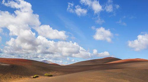 Lanzarote van