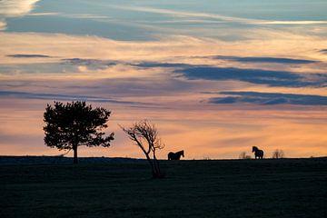 Pferde im Abendlicht van Annett Mirsberger