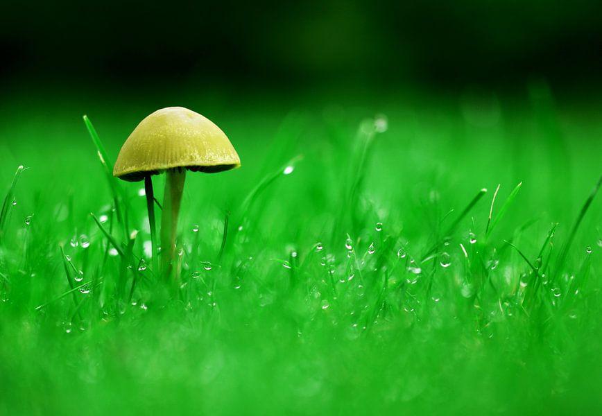 Eenzame paddenstoel groen/geel van C Dekker