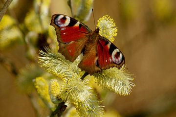 kleurrijke vlinder van