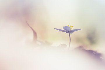 Sunshine van Bob Daalder