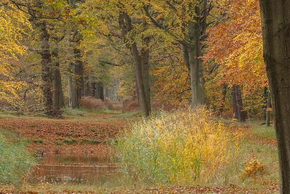 Herfst van Menno Schaefer
