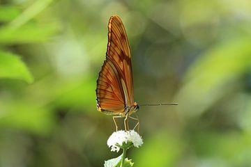 Oranje vlinder op bloem von Martin van den Berg Mandy Steehouwer