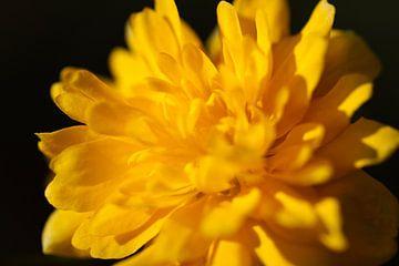 Gele bloem close up van Marieke Funke
