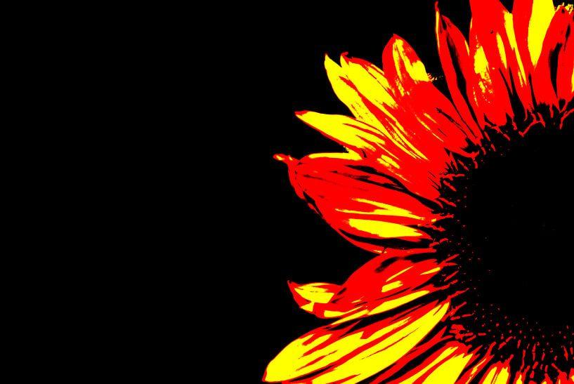 Zonnebloem van Leo de Graaf
