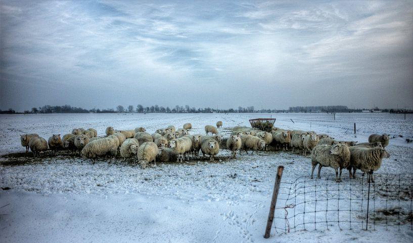 Een koppel schapen in de sneeuw van Henk Vrieselaar