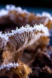 IJskristallen paddenstoel