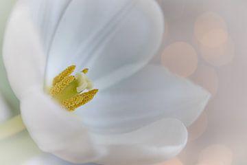 Weiße Tulpe mit Bokeh-Hintergrund von Jefra Creations