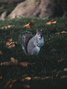 Eichhörnchen im Herbst von Leo van Gemmern