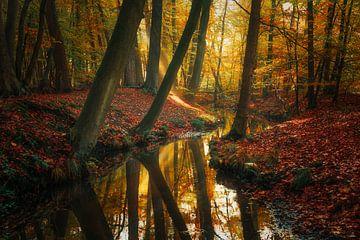 Überhängende Bäume von Joris Pannemans - Loris Photography