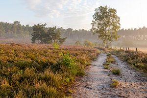 een prachtige ochtend op de heide in belgisch limburg van