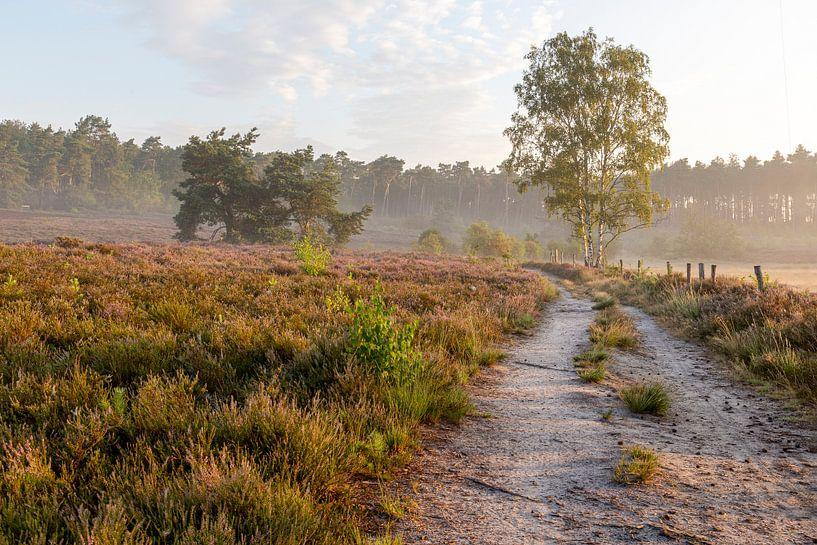 een prachtige ochtend op de heide in belgisch limburg van Krist Hooghe