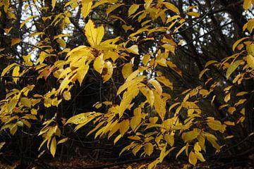 Autumn van Carlien Hartgerink