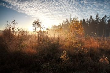 Autumn sunlight von