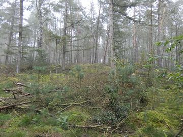Het Bos van Ronald Wakker