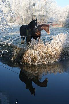 Winter horses von Babette Veenendaal