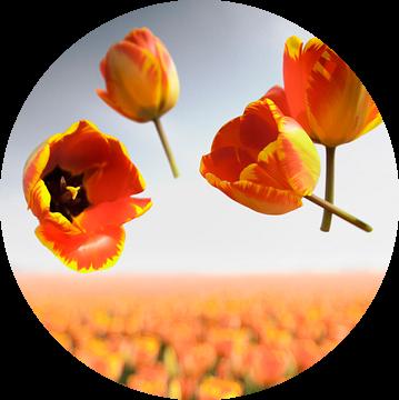 Flower Power - Banja Luka van Claire Droppert