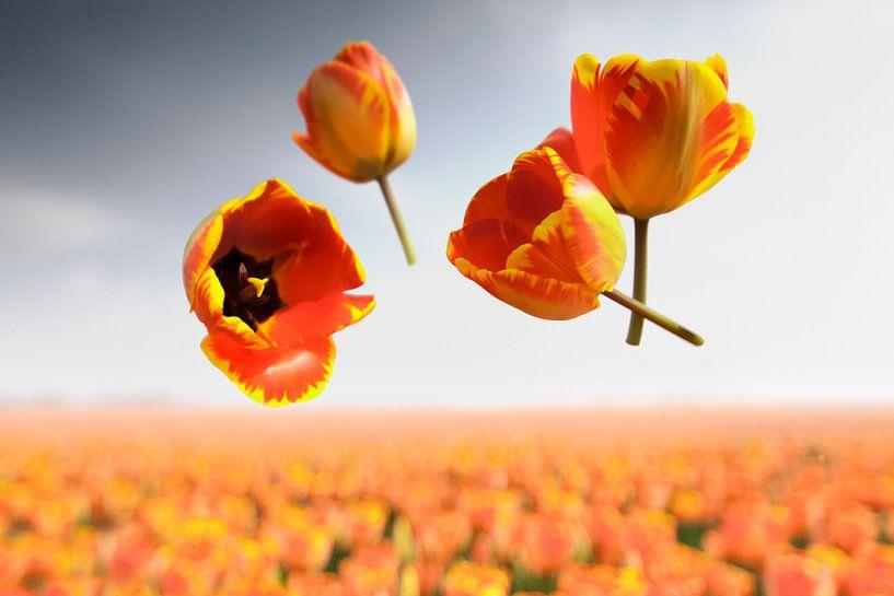 Blumenkraft - Banja Luka von Claire Droppert