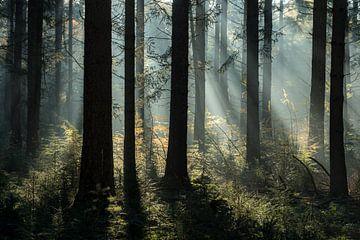 mystischer Pinienwald von Eelke Brandsma
